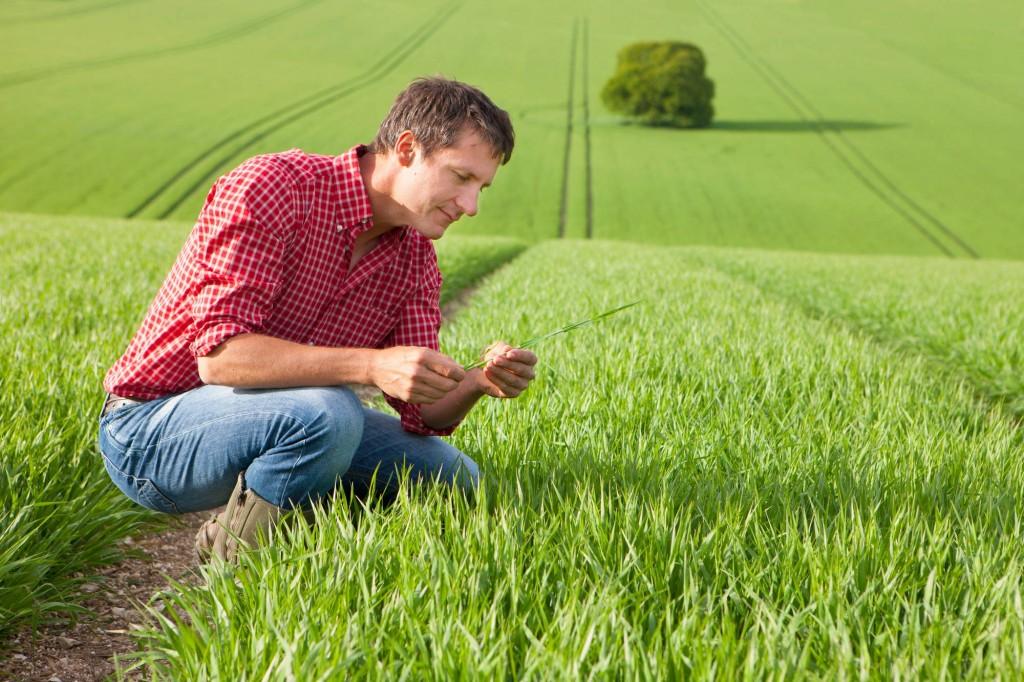 Nuove e vecchie professioni nel campo dell'agricoltura sostenibile