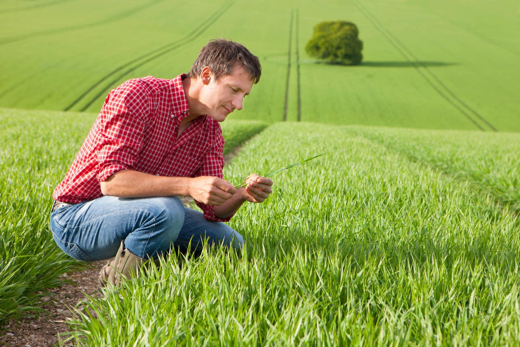 nuove e vecchie professioni nel campo dell 39 agricoltura