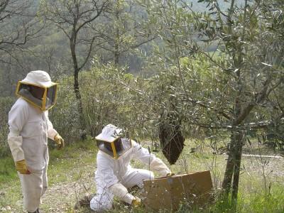 apicoltore-salute